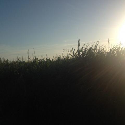 Zwillingsratgeber iphone_mai2016-1104-700x700-640x480 Dänemark - Tour an der Küste lang