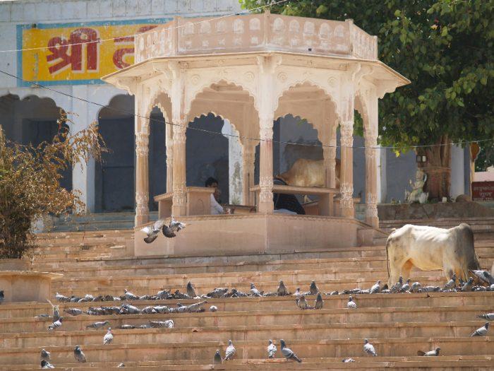 Zwillingsratgeber p1011410-700x525 Aufenthalt in Pushkar