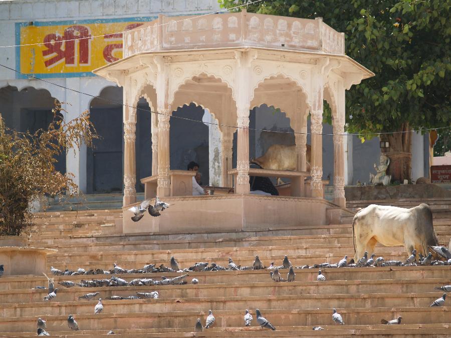 Zwillingsratgeber p1011410 Aufenthalt in Pushkar
