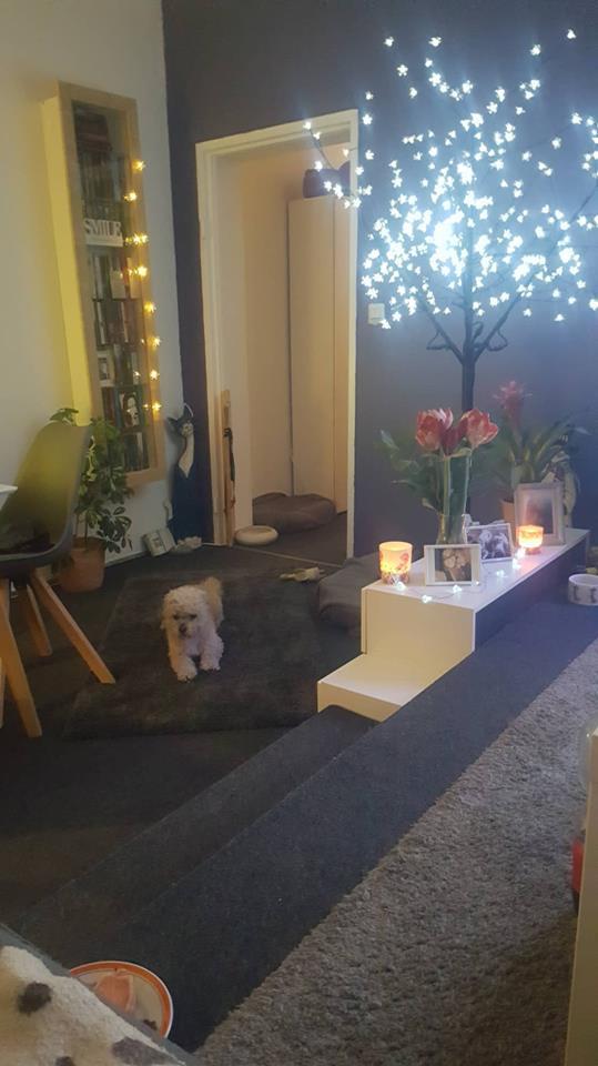 Zwillingsratgeber hund-britta-oma-tochter Interview mit der alleinerziehenden Zwillingsoma Britta