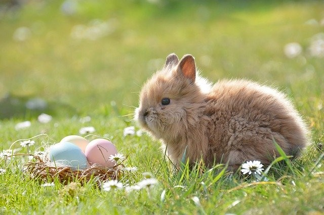 Zwillingsratgeber osterhase-osterbrauch Osterbräuche für Familien: Warum färben wir an Ostern Eier?