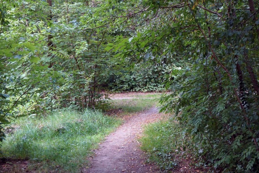 Zwillingsratgeber jakobsweg-ensodrf-schwandorf-1024x683 Auf dem Jakobsweg: Schwandorf nach Ensdorf